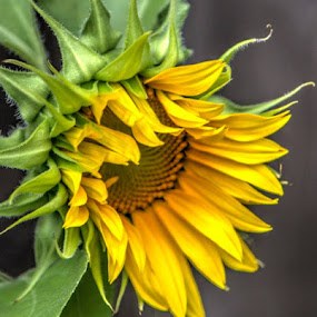 by Debbie Duggar - Flowers Single Flower