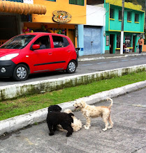 Photo: 3 dogs just playing on the streets!  Didn't your mama teach you not to play on the streets?!  Baños, Ecuador.  June 2012.