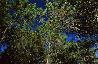 Photo: Shot with Nikon F75 - Nikkor 24-70 f/2.8 - Fuji VELVIA at -2 IL