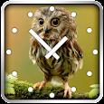Owls Clock Widget icon