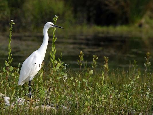 l'uccello bianco di Fabrizio Franceschi