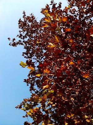 L'autunno si scaglia nel cielo di Funghetto97