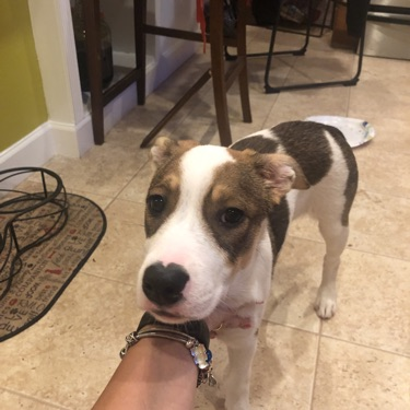 Do you know my owner?, FOUND Jun 5, 2019