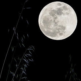 Super Moon by Mon Rojumnong - Landscapes Starscapes