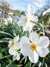Photo: White flowers at Cox Arboretum in Dayton, Ohio.