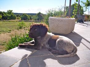 Photo: Jethro op vakantie in de Ardèche