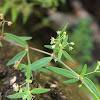 Old World Diamond Flower