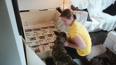 Photo: In de werpkist leggen wij lakens met kranten erin. Kyra komt hier even controleren of wij 'haar nestje' wel goed maken. Aan de lebbers over mijn gezicht kon ik opmaken dat ze het er mee eens was ;)