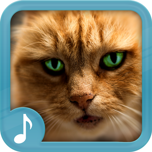 download cat meow sound