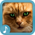 Miaulement - Sonneries de Chat icon
