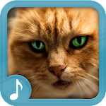 Meowing Cat Sounds 45.0 Apk