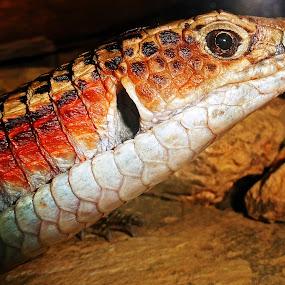 by Shashank Ramesh - Animals Reptiles