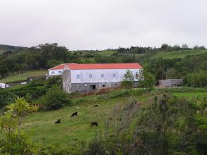 Photo: Коровы/Cows
