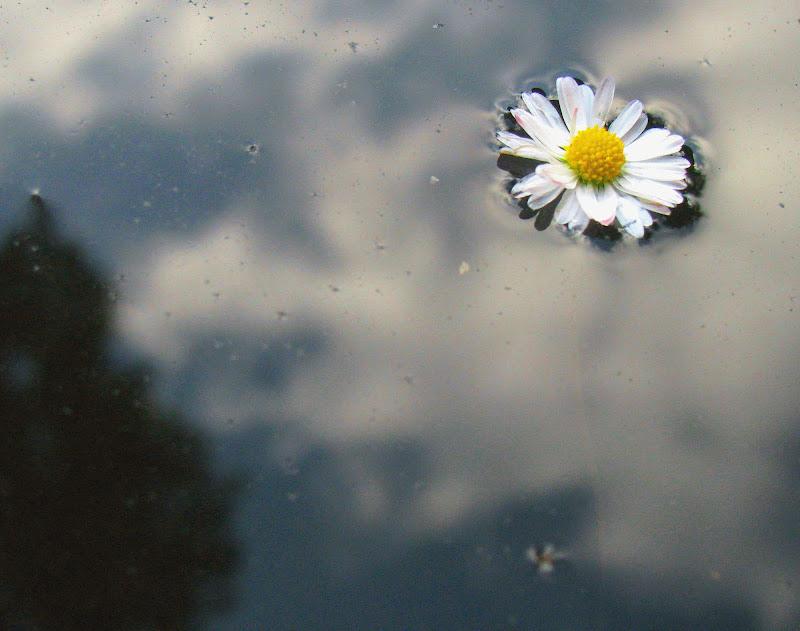 Sull'acqua di Elisabetta Di Girolamo