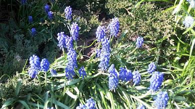 Photo: F4233131 w Ogrodzie Botanicznym