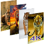 Wallpaper Tiger New 4K Background | HD Image APK icon