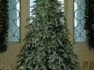 Christmas Tree Spray Recipe