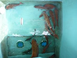 Photo: こちらも真鯛追加中。