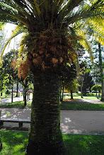 Photo: Palmeira con Fentos