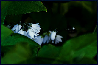 Photo: there's no need to hide  Kosheen ☛Catch  Have a good night / day!