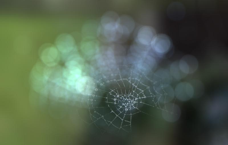 La tela del ragno di Andri55