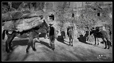 """Photo: Looking back. A traditional festival, well established in Catalonia is the """"Traginers"""". These were the ones with the help of horses, mules and donkeys, transporting people and goods before the existence of motor vehicles. Currently each year in various towns people dress like in that bygone era and parade through the streets of these towns with their animals and wagons.  My contributión to #transporttuesday by +Steve Boyko+Gene Bowker+Michael Earley+Joe Paul #equinetuesday by +Jillian Chilson #breakfastclub by +Gemma Costa #breakfastartclub by +Kate Church #plusphotoextract by +Jarek Klimek"""