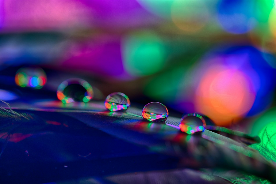Colorful Drops on Feathers by Jennifer Griephan - Abstract Macro ( colorful, colors, drops, feathers, light,  )