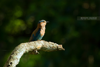 Photo: The Beautiful Blue Jay!
