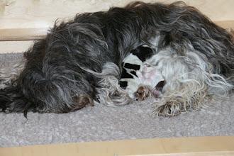 Photo: Glucke Cini mit 2 tief schlafenden Mädels (Ellie und Toffie)