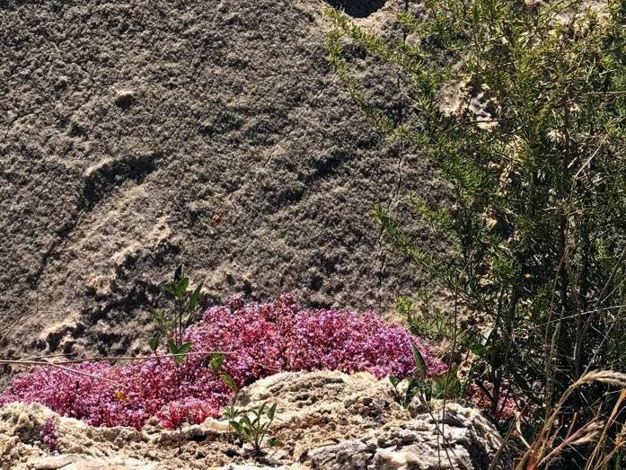 fiori su roccia