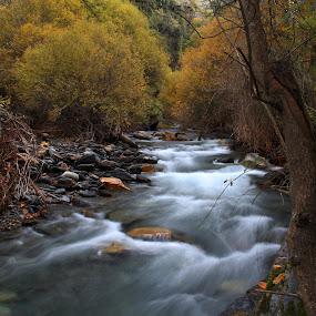 Autumn River by Cornelis Cornelissen - Nature Up Close Water ( moving water, orange, stream, guejar sierra, sierra nevada, autumn, rio genil )