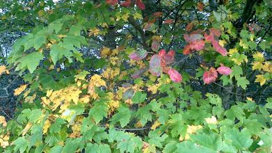Photo: Fall colors (or Autumn colours)