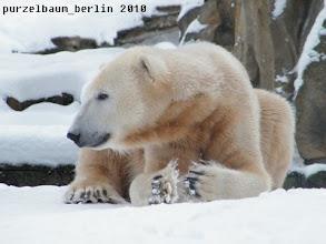 Photo: Ein freundlich dreinblickender Knut :-)