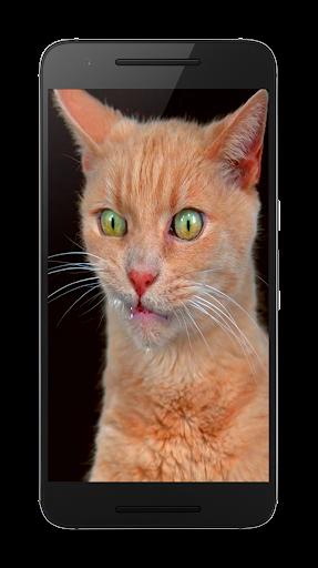 猫はビデオライブ壁紙
