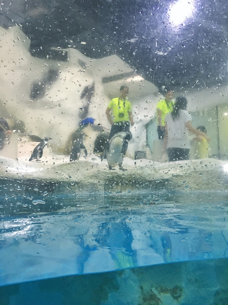 Visit 13 attractions of manila ocean park rizanoia for Humboldt swimming pool schedule