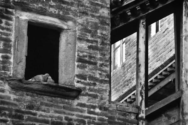 RomeoJuliet.. i piccioncini innamorati di Maurizio Valentini