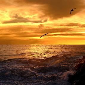 Night Flight by Loredana  Smith - Landscapes Sunsets & Sunrises ( shore · australian · tropical · solitude delete ocean · beach · beauty · travel · landscape · coastline · romance · escape · coast · sun · tranquil · sky · nature · idyllic · surf · climate · water · sand · seashore · waves · sea · leisure · tourism · seascape · relaxation · vacations · paradise · coastal · tourist · color · sunset · serene · australia · scene · view · panoramic · culture )