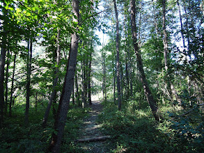 Photo: Virginia Forest in Summer