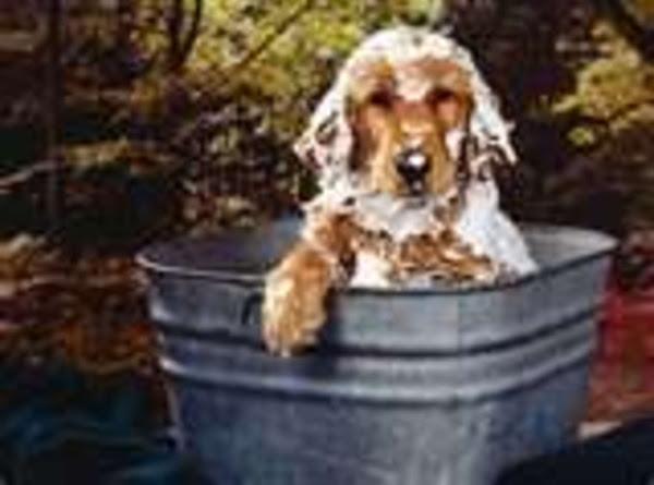 Easy Tea Tree Shampoo For Dogs/goats Recipe