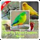 Download Canto De Pájaro Completo Nuevo For PC Windows and Mac 1.0