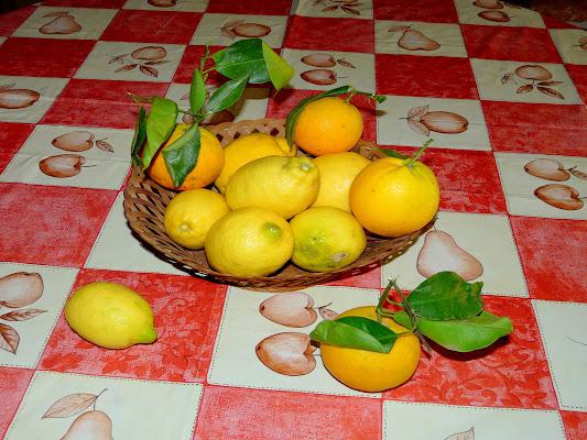 Canestra di limoni e arance di Mario Romano