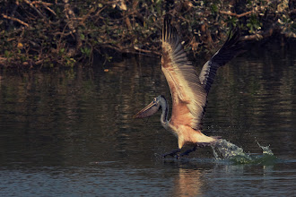 Photo: Pelican Landing
