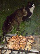 Katinai prie šašlyko