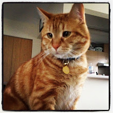 Photo: Young cat portrait #intercer #cat #pet #portrait - via Instagram, http://instagr.am/p/Lwp-wEJflY/