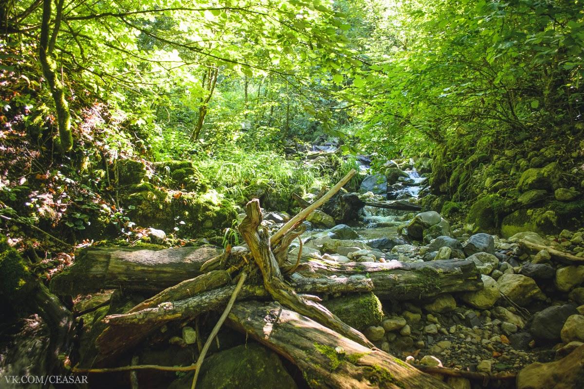 Каряги, камни, поваленные деревья и ручей