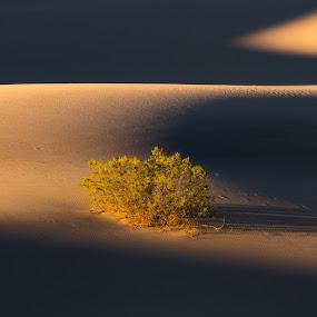 Death Valley Sunrise by Evver Gonzalez - Landscapes Deserts ( landscape photography, sunrise, bush, sony alpha, inyo county, sand dune, national park, sand, death valley national park, death valley, shadows, california, desert, landscape )