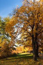 Photo: Autumn in progress...  #autumn  #autumnphotography  #landscapephotography  #landscape  #europeanphotography
