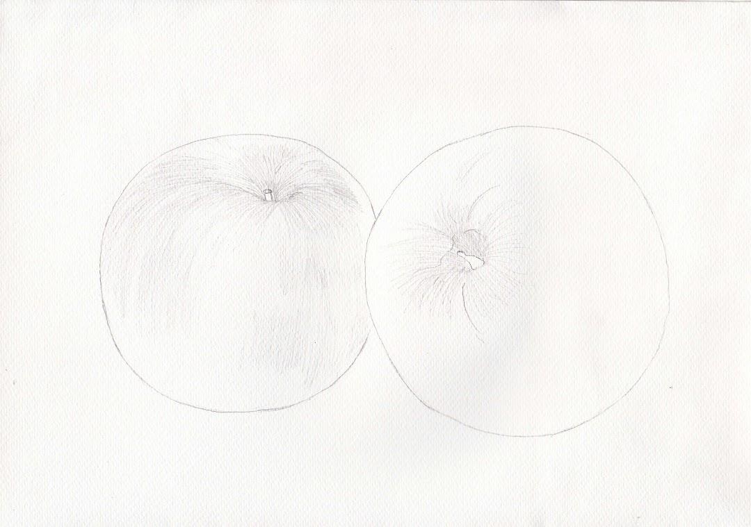 500 Gambar 2 Dimensi Apel  Paling Baru