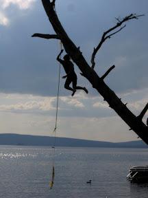 Jakie swinging from the tree