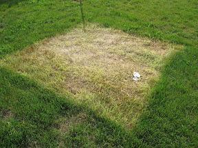 Dead grass under the tent